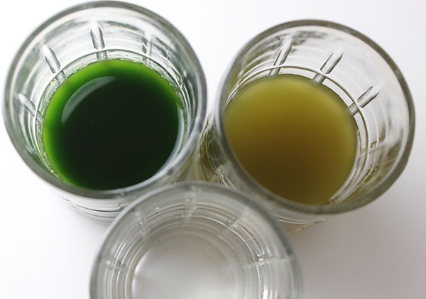 All About Plankton Properties  Benefits And Use In The Kitchen
