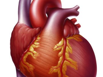 Rest Can Reverse The Effects Of Heart Failure