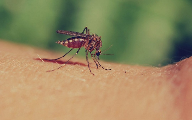 How To Protect The Child From Mosquito Bites?